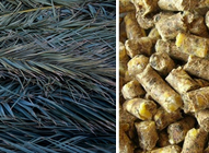 Feasibility Analysis of Oil Palm Wood and Oil Palm Fronds Pellets in Malaysia and Indonesia